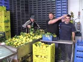 citroenen voor de export