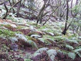 Laguna Grande tropisch woud