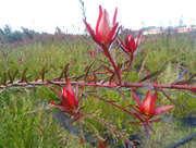 bloem of bladeren