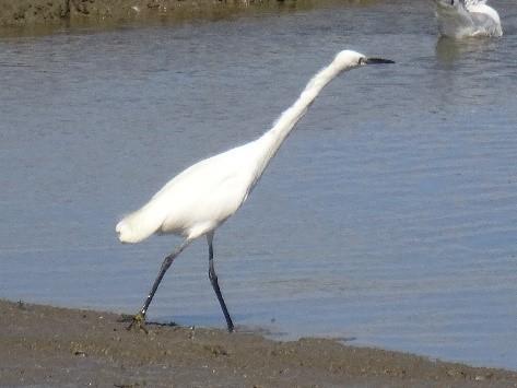Vogels in het natuurgebied